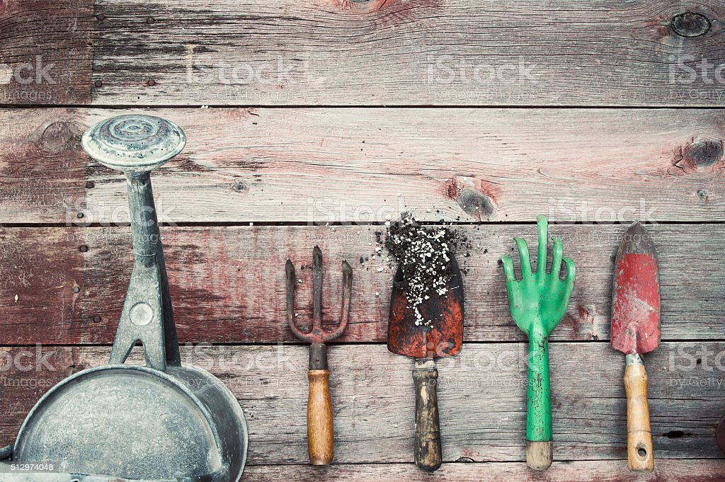 Gardening Hand Tools, Watering Can, Shovel, Rakes, on Wood Background stock photo