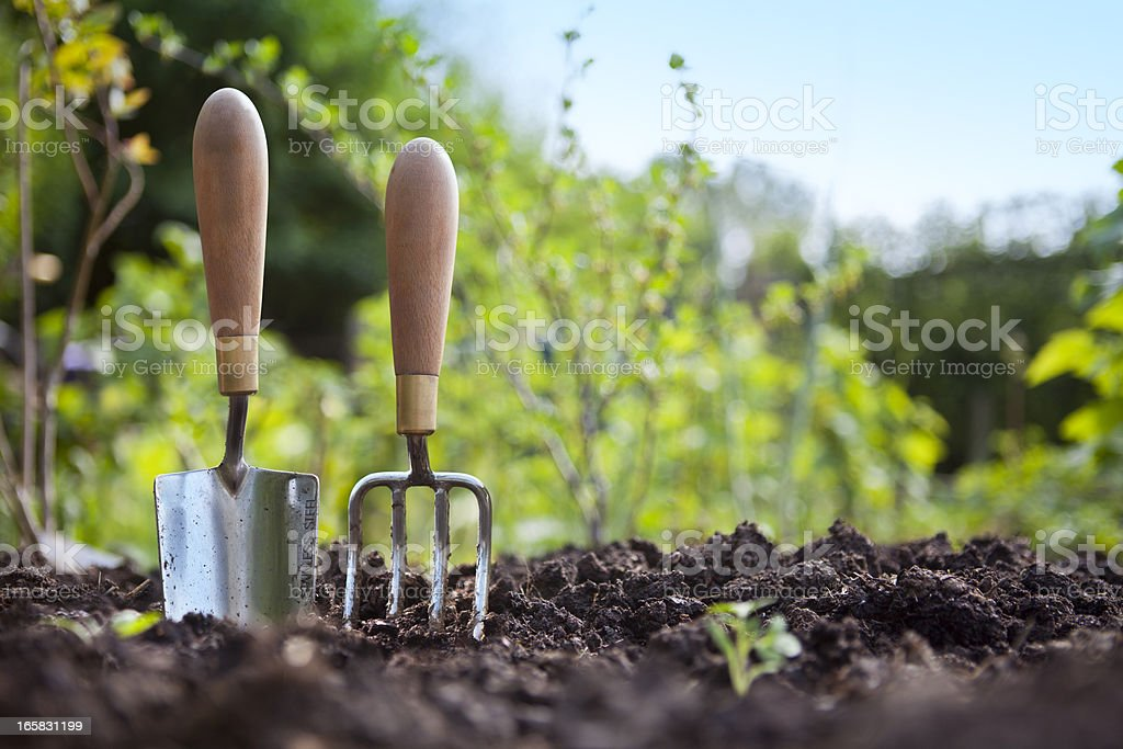 Gardening Hand Trowel and Fork Standing in Garden Soil stock photo