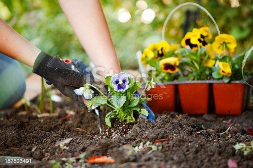 istock Gardening Hands 157523491