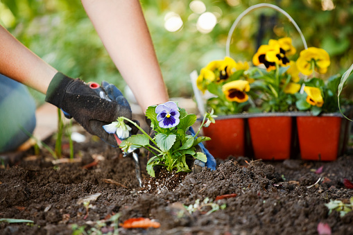 A pair of hands working with gardening tools on freshly worked soil.