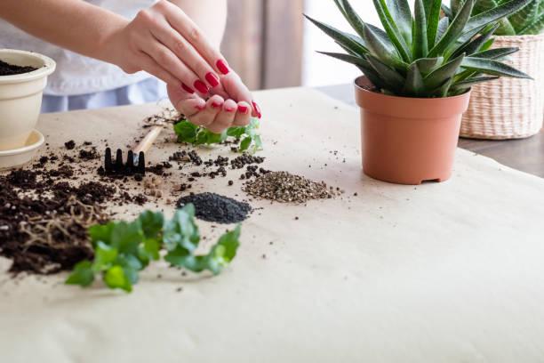 jardinería hobby semilla germinación mujer siembra - foto de stock