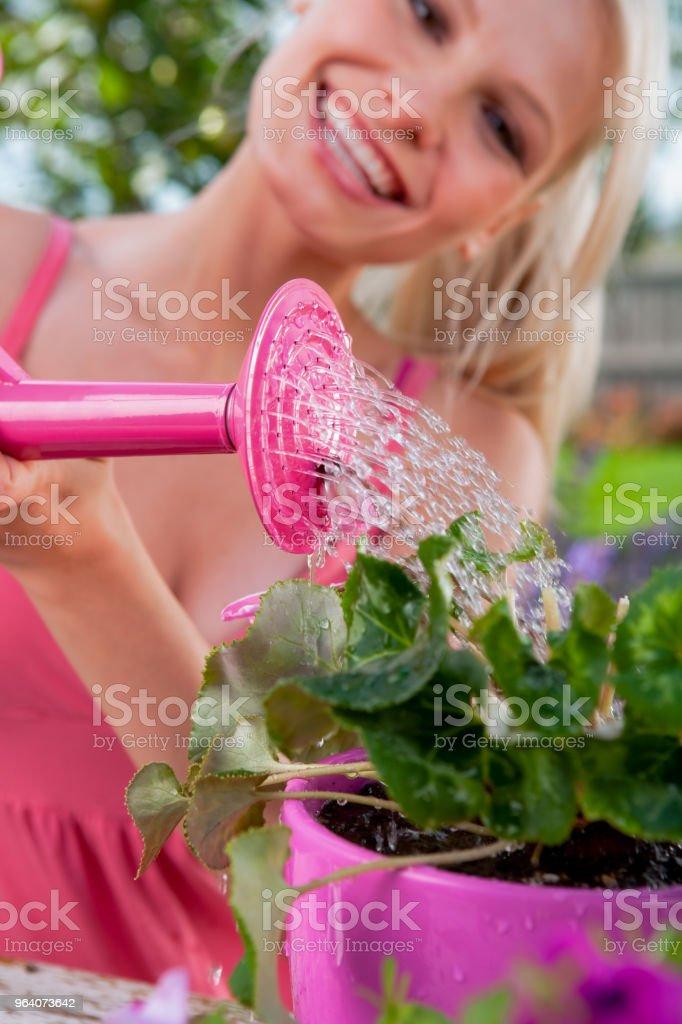 Gardening in backyard - Royalty-free 20-24 Years Stock Photo