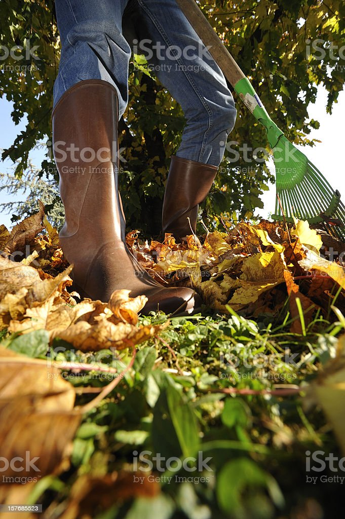 Gardening in rubber boots royalty-free stock photo