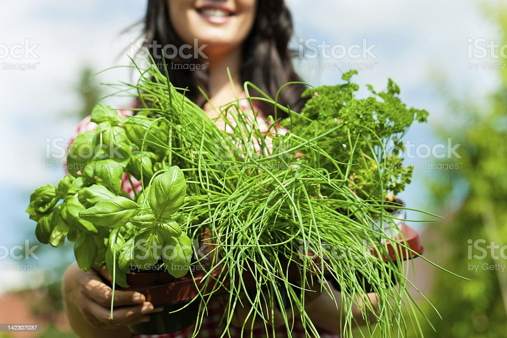 Gardening in summer - woman with herbs royalty-free stock photo