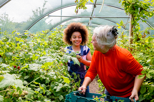 A senior woman and young girl help out in the greenhouse at the local farm.