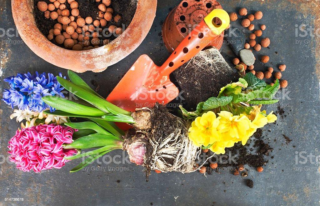 gardening in the springtime, stock photo