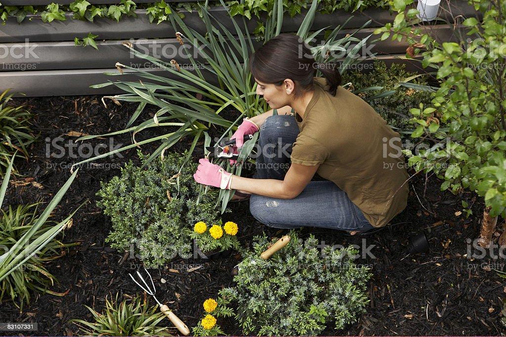 Gardening in urban backyard royalty free stockfoto
