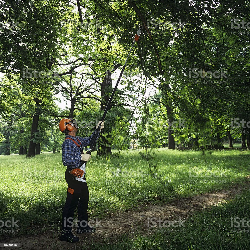 Gardening: man cutting the tree branches stock photo