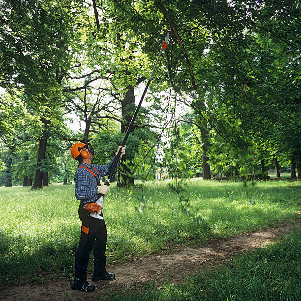Gardening: man cutting the tree branches Square format, summer hedge clippers stock pictures, royalty-free photos & images