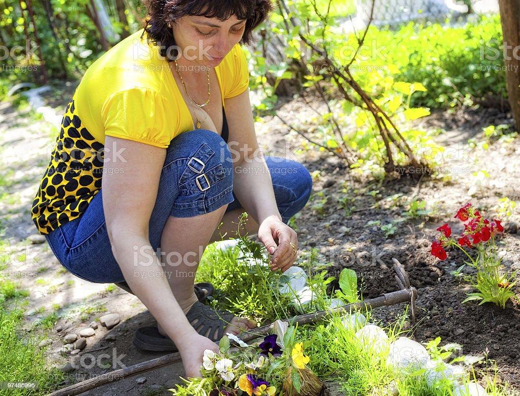 Gardening - mature woman planting flowers royalty-free stock photo