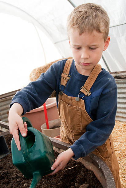 Gardening Little boy watering newly planted seeds in his greenhouse. bib overalls boy stock pictures, royalty-free photos & images