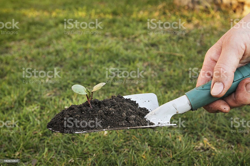 gardening royalty-free stock photo