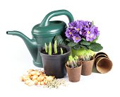 Seeds, bulbs and seedlings with watering can on white background.