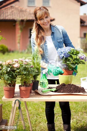 Beautiful mature woman gardening outside. She is in front of her house,transplanted hydrangea plants