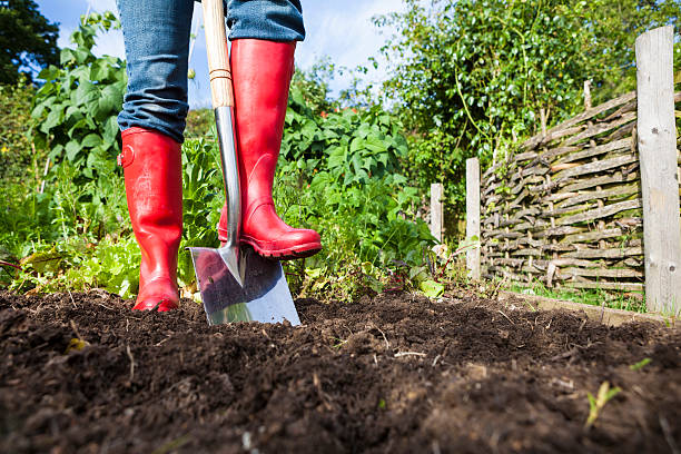 Gardening Gardening stock photo of a gardener wearing bright red wellies digging over soil in a vegetable patch. community garden stock pictures, royalty-free photos & images