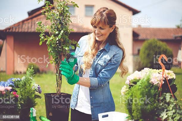 Gardening picture id534036158?b=1&k=6&m=534036158&s=612x612&h=kc46 qeberlf eunsdtc9p9udh6qhq5oage11zy xau=