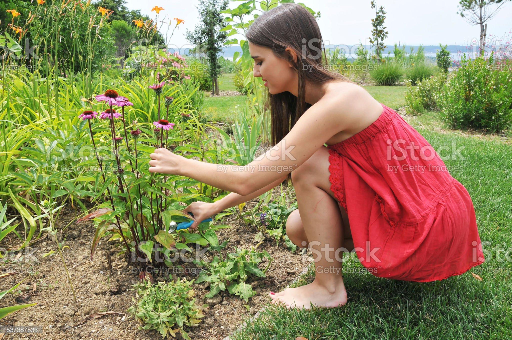 https://media.istockphoto.com/photos/gardening-picture-id537387533?s=2048x2048