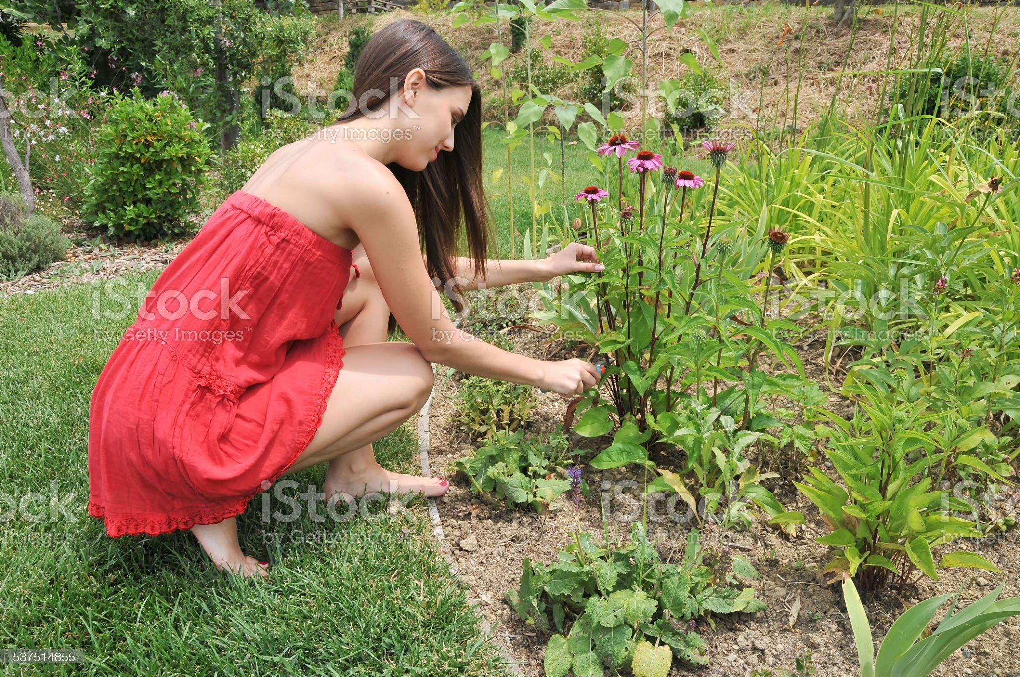 https://media.istockphoto.com/photos/gardening-picture-id537514855?s=2048x2048
