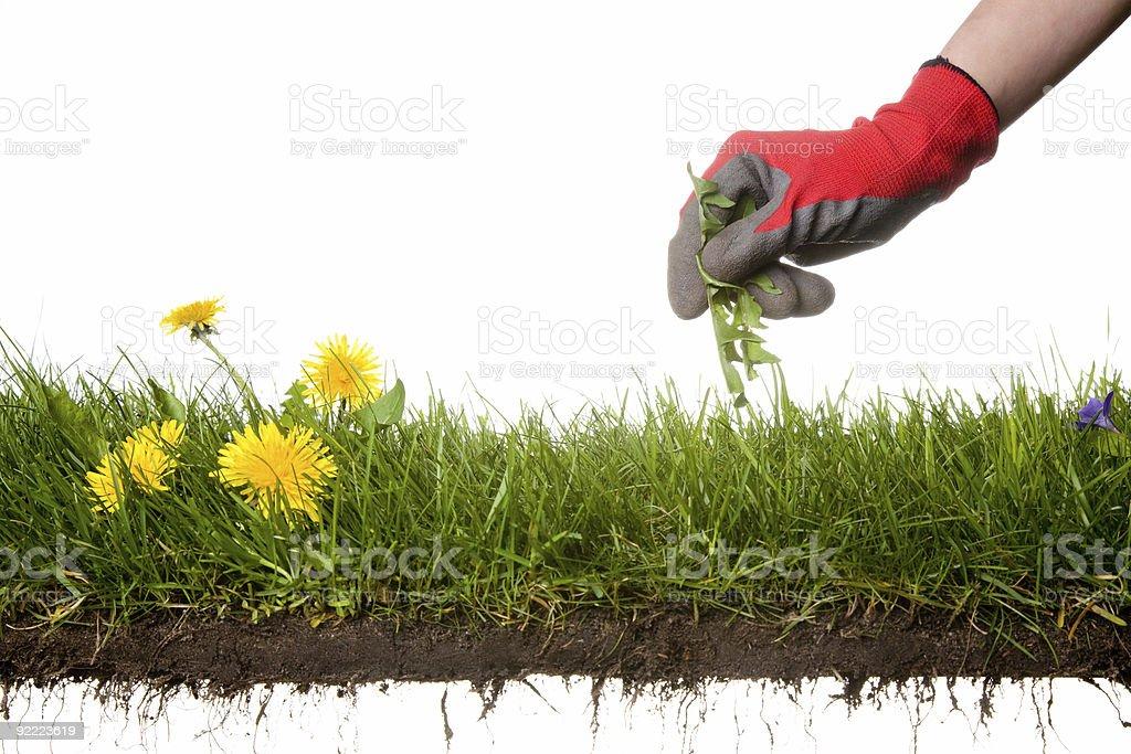 Jardinagem - foto de acervo