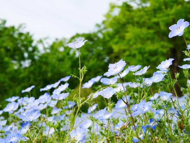 gardening - forest bathing foto e immagini stock