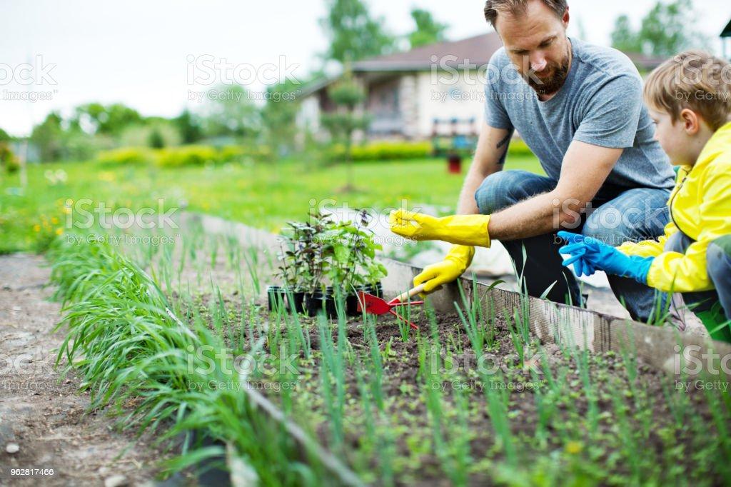 Jardinagem  - Foto de stock de 30 Anos royalty-free