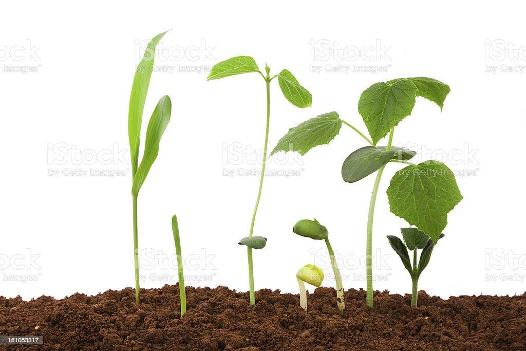 Jardinage de choix de sol isolé sur fond blanc - Photo