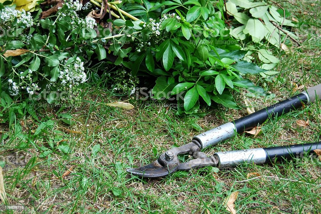 Gardening pruning loppers and leaves stock photo