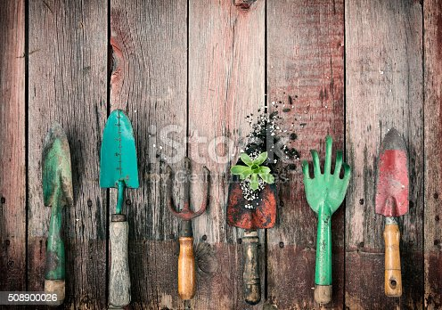 Gardening Shovels and Rakes with Dirt and a Succulent Plant on Old Wood Backgrounds