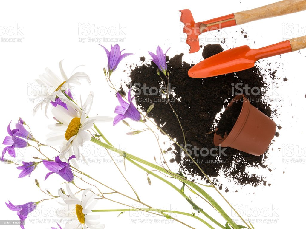 gardening still life with delicate flowers royalty-free stock photo