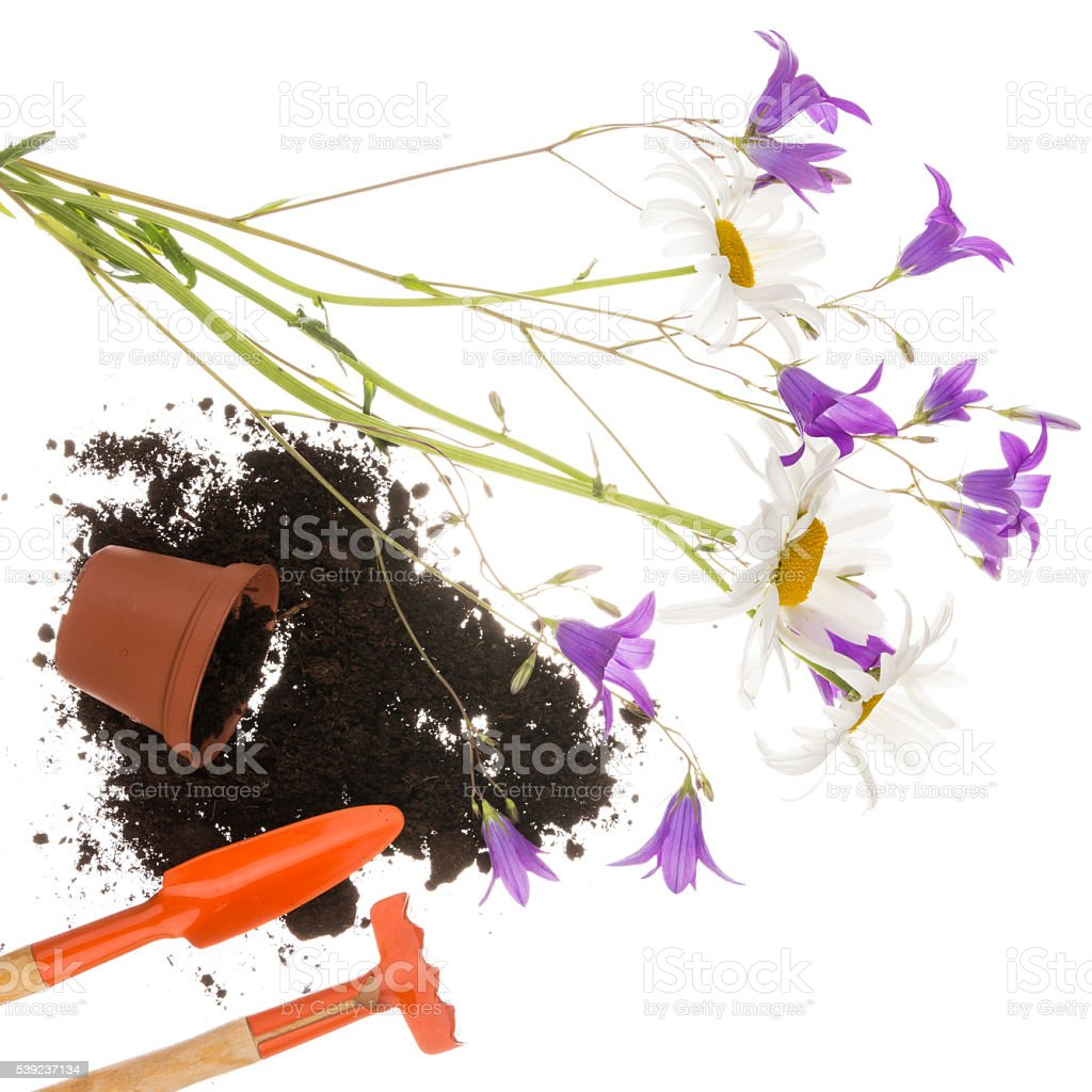 gardening still life with small flowers royalty-free stock photo