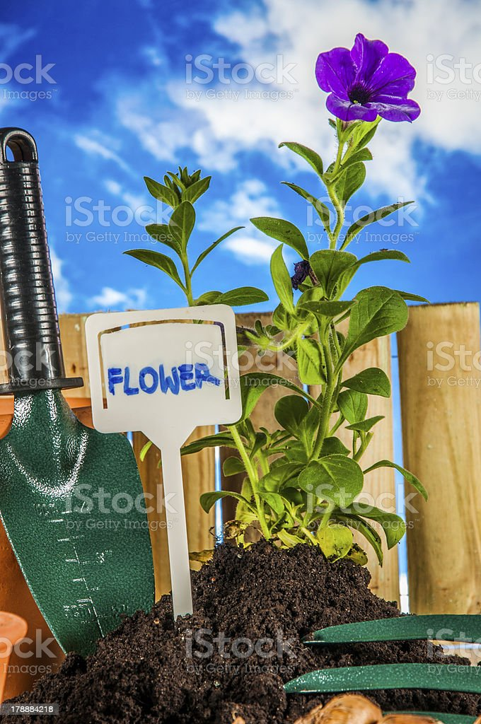 Gardening stuff with vivid colors and blue background royalty-free stock photo
