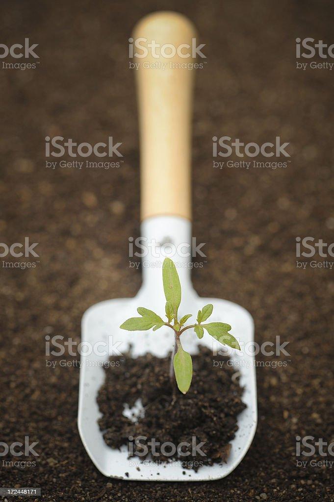 Gardening Time! royalty-free stock photo