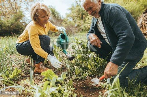 istock Gardening together 672836976