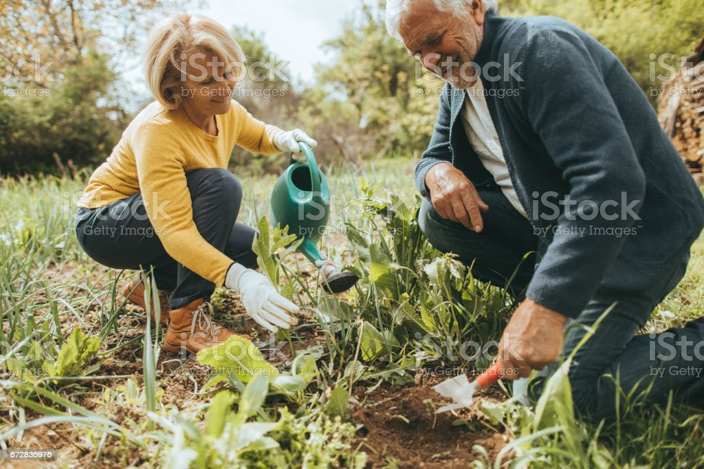 Gardening together stock photo