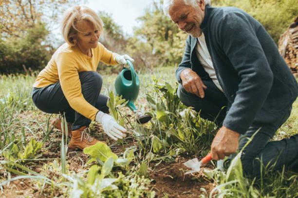 jardinería juntos - jardinería fotografías e imágenes de stock