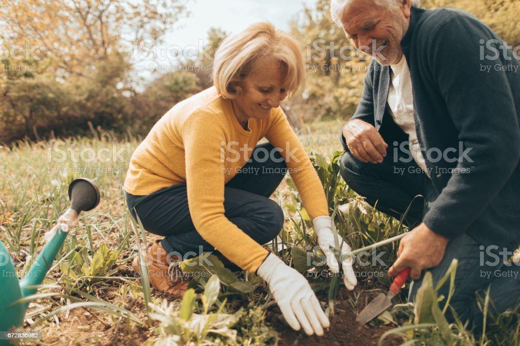 Gardening together stock photo