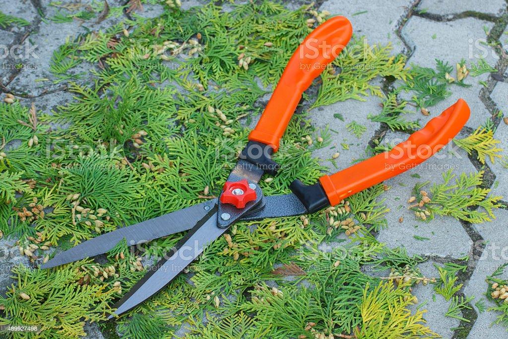 Gardening tool to trim bushes, seasonal trimmed bushes stock photo