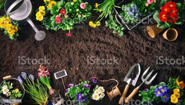 Gardening tools and flowers on soil picture id1134719594?b=1&k=6&m=1134719594&s=612x612&h=qopnrd8mt0wxmmk04hjayvlndumr9jr88mwxi5xt7da=
