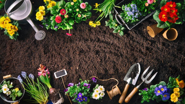 Gardening tools and flowers on soil Planting spring flowers in the garden. Gardening tools and flowers on soil gardening stock pictures, royalty-free photos & images