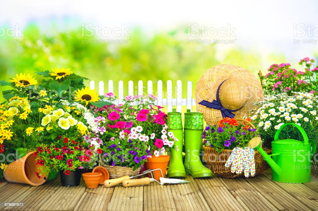 Gardening tools and flowers on the terrace i stock photo