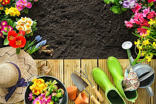 gardening tools and flowers on the terrace - formal garden stock photos and pictures