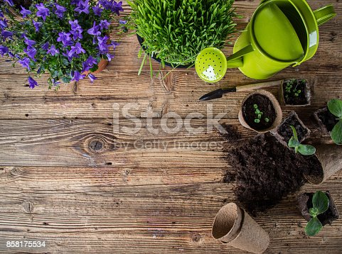 istock Gardening tools and flowers on wooden background 858175534