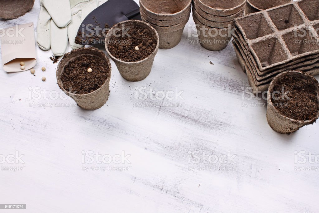 Gardening Tools and Planting Seeds stock photo