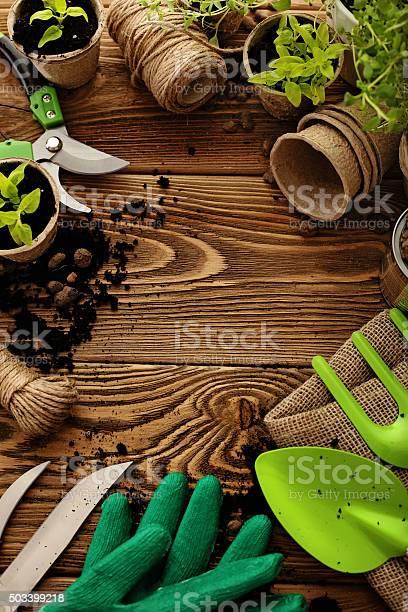 Gardening tools and plants picture id503399218?b=1&k=6&m=503399218&s=612x612&h=1lazkychzeybtd1zfntd h175ffdryt ilzosfn ky4=