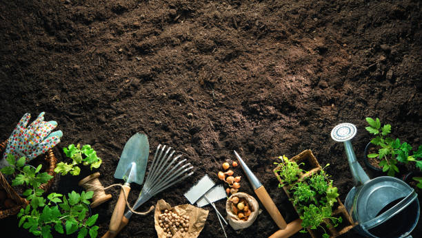 Gardening tools and seedlings on soil stock photo
