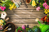 istock Gardening tools and spring flowers 673657442