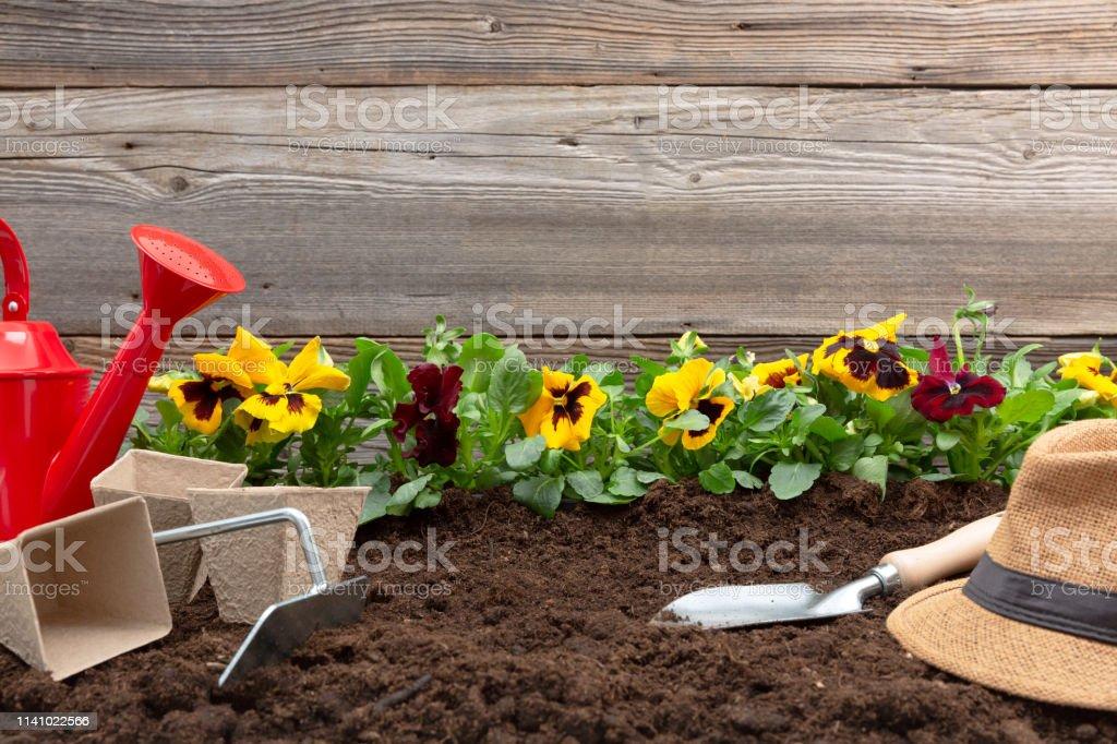 Herramientas De Jardinería Y Flores De Pansy Primavera En La