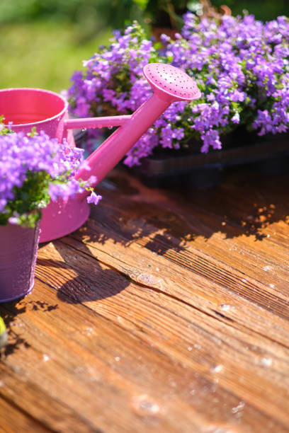 정원 의 테라스에 원예 도구, 캔과 꽃 스톡 사진