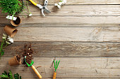 istock gardening tools, flowers, plant, pot, scattered earth, seeds on wooden background with copy space for text, flat lay composition, top view 1138051532