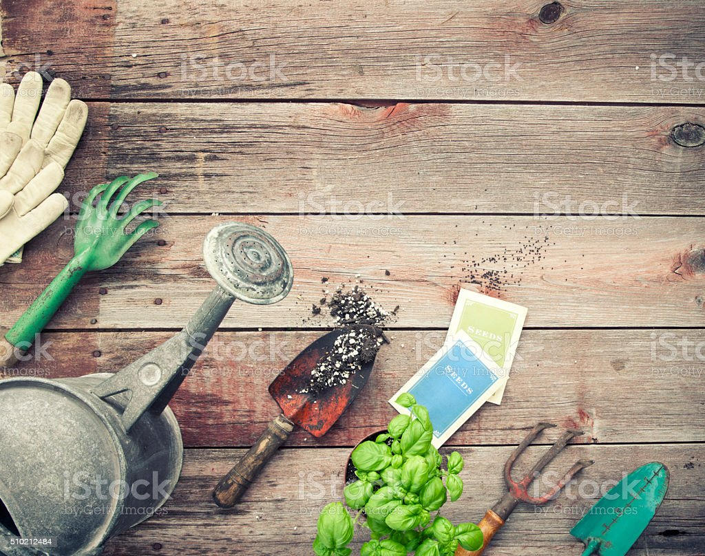 Gardening Tools, Herbs, Basil, Seeds, Watering Can on Wood Background stock photo
